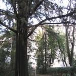 Le parc de la communauté