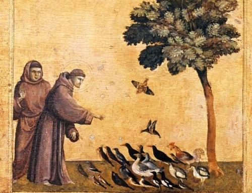 Fiche Ecojesuit n°19 – La conversion écologique